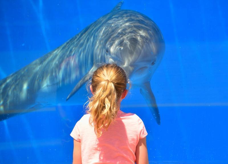 От строительства дельфинария окончательно отказались в Волгограде