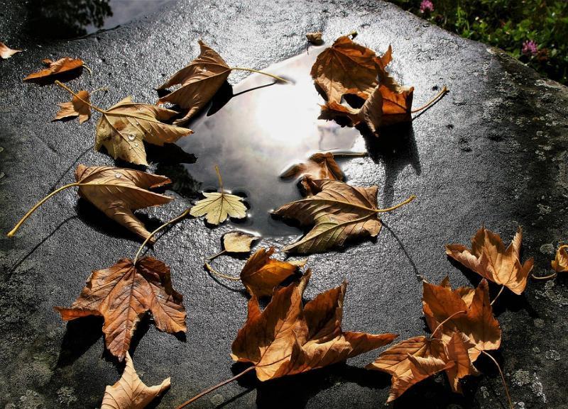 Порывистый ветер и дождь продолжат одолевать волгоградцев в понедельник