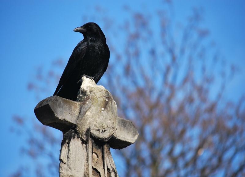 Стало известно, откуда повезут волгоградцев до кладбищ в Пасху