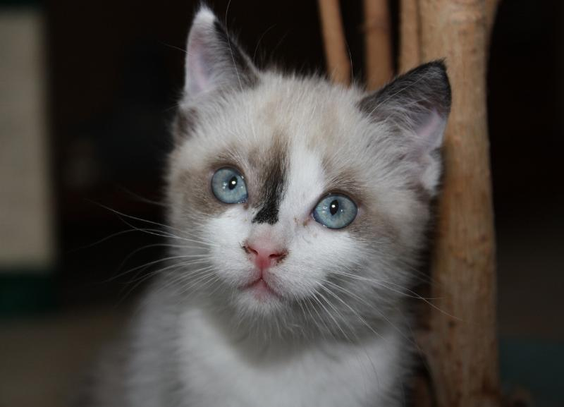 Жителя Волгоградской области осудили за убийство котенка на глазах детей