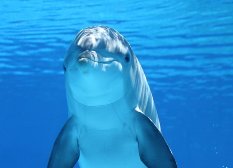 Против строительства дельфинария с петицией выступают волгоградцы