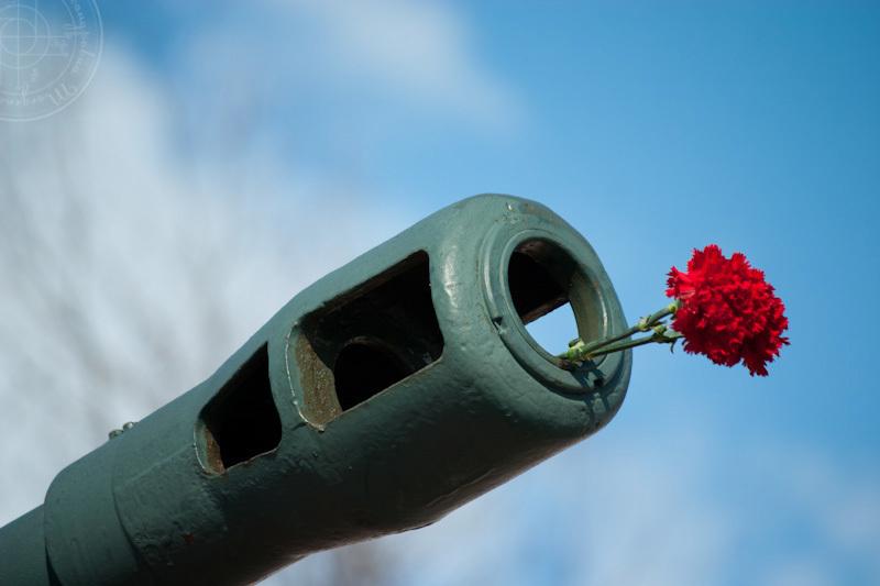 23 февраля волгоградки поздравили своих любимых завоевателей