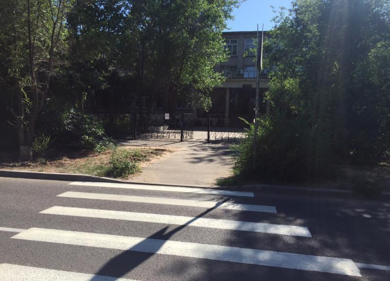 Водители из Волжского жалуются на ветки, из-за которых не видно пешеходный переход
