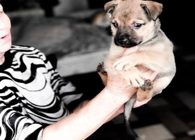 «Жестокость человека не знает границ»: школьники в Волгограде положили месячного щенка на трамвайные пути