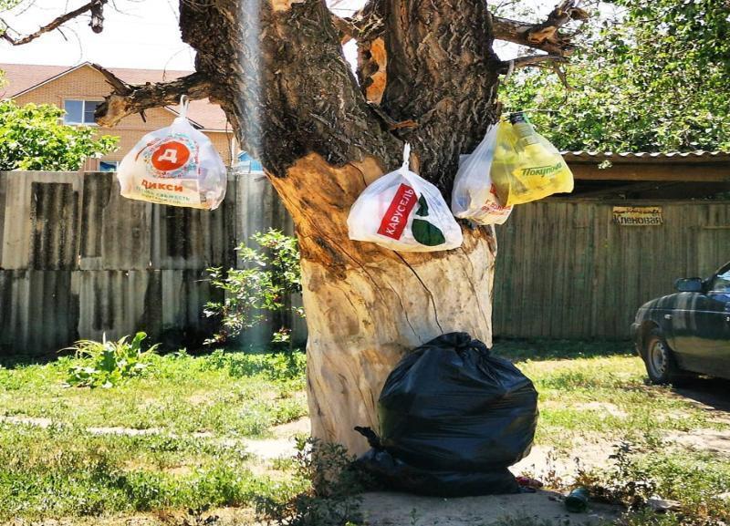 Вывешивать пакеты с мусором на деревья вынуждены жители в Кировском районе Волгограда