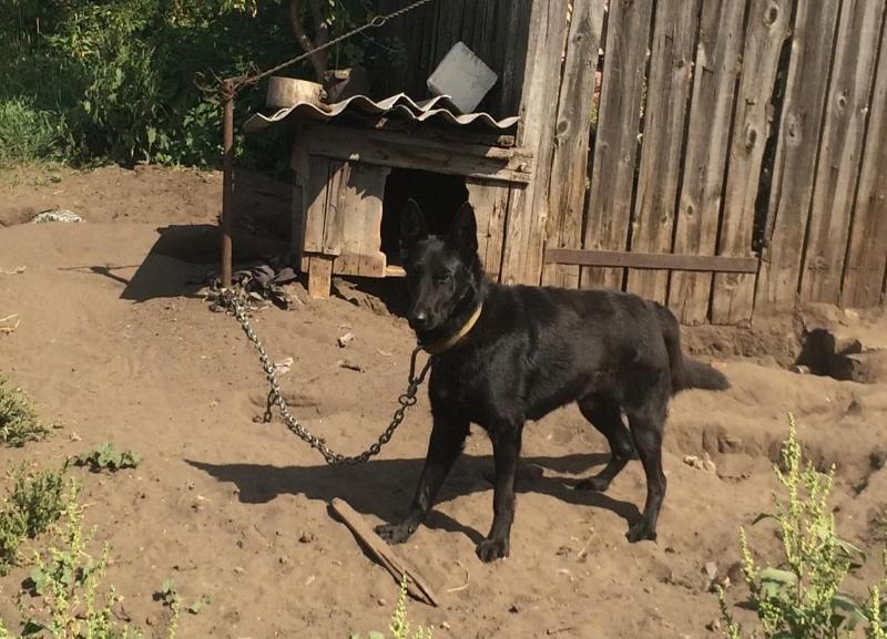 Стали известны подробности гибели годовалого мальчика под Волгоградом которого растерзала собака