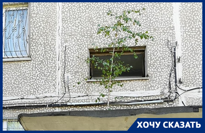 На козырке у подъезда волгоградского дома растет береза