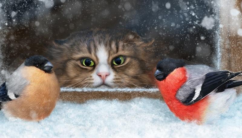 «Зверье мое»: какие птицы любят волгоградскую зиму