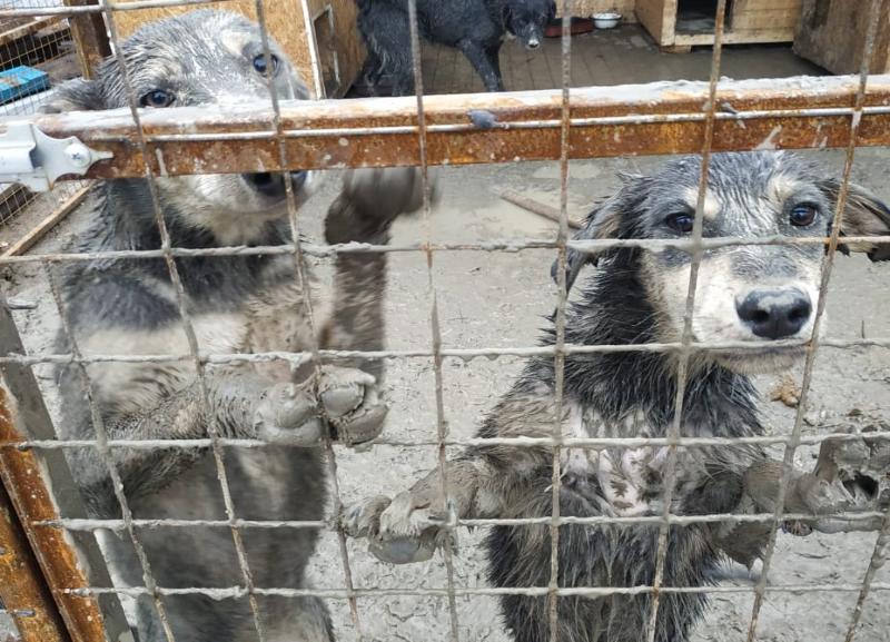 Приют с 41 травмированным животным  в Волгограде стал тонуть в грязи после ночного дождя