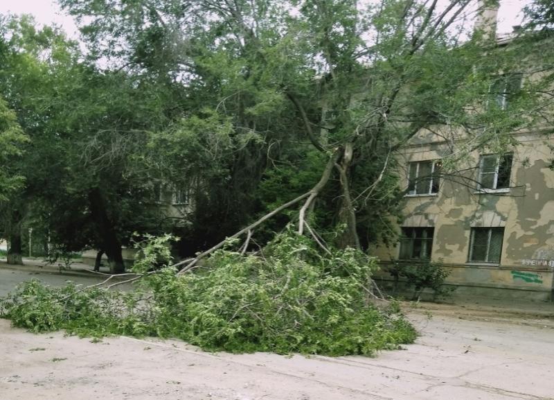 Массово ликвидировать последствия штормового ветра вынуждены коммунальщики в Волгограде