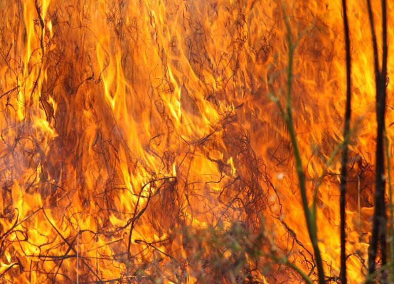 О массовых пожарах по всей Волгоградской области заявили в МЧС