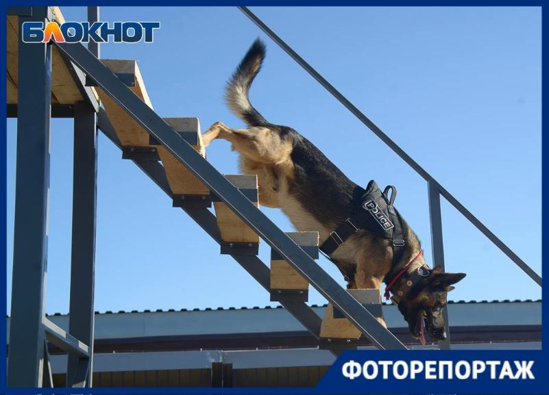Следить за порядком и искать взрывчатку будет своя конная полиция и кинологическая служба в Волгограде