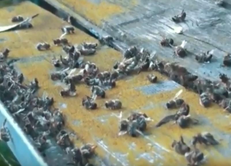 Владельцев пасек за день обанкротили, отравив тысячи пчел с помощью авиации в Волгоградской области