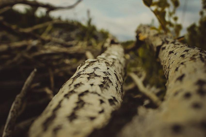 Предприниматель нанес вред лесу на13 млн при строительстве дороги под Волгоградом