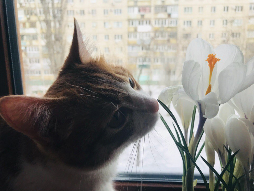 Вовторник в столице наступит весна. Пока только астрономическая