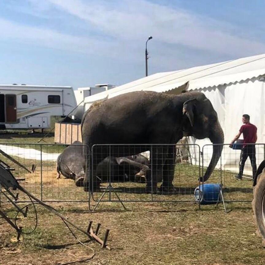 Настоящий слон будет гулять в центре Волгограда