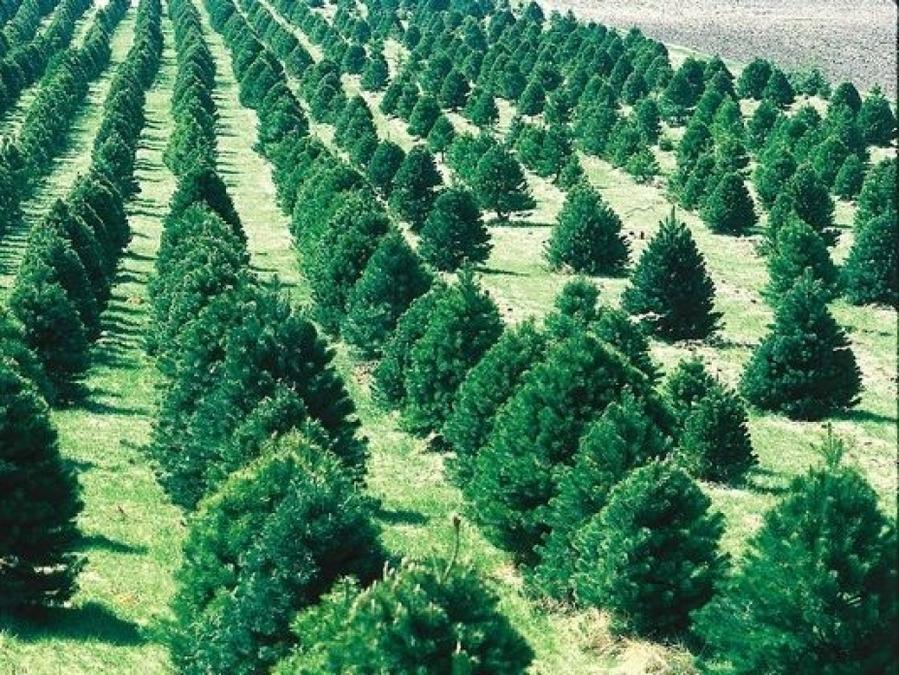 Всего 4% леса осталось во всей Волгоградской области