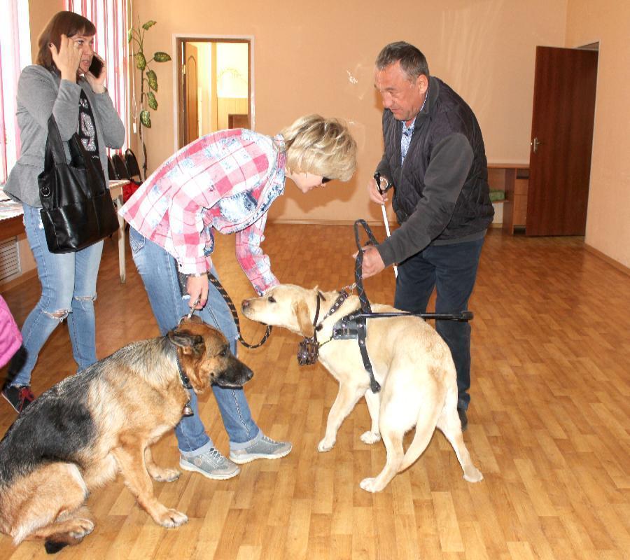В Волгограде собаки-поводыри стоят более 100 тысяч