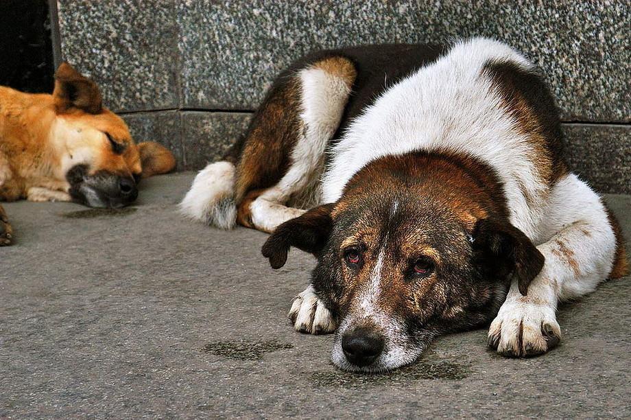 В Волгограде директор компании по отлову бездомных животных продавал собак на мясо и мех
