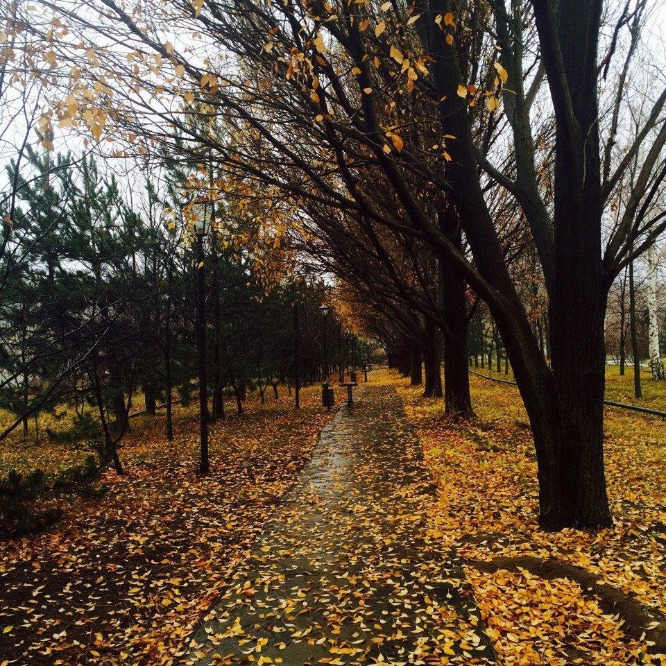 Волгоградскую область заливают дожди