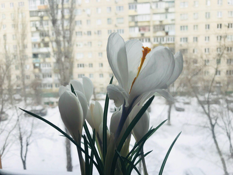 В Волгограде продолжается «температурная лихорадка»