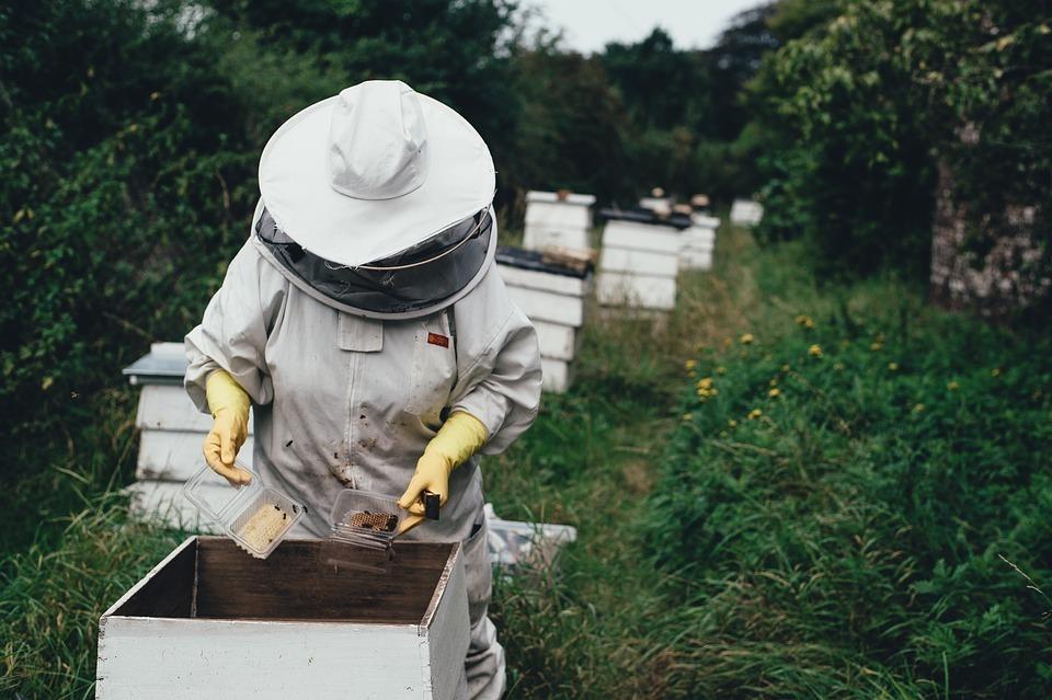 Пчеловод умер в поле при сборе меда в Волгоградской области