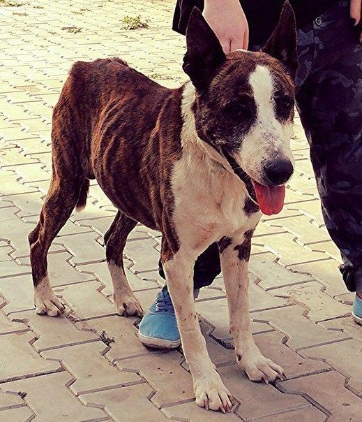 В Волгограде у собаки заболело сердце из-за стрельбы и жестокого обращения людей