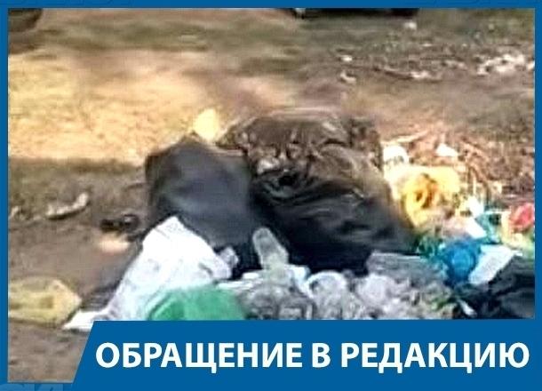 Поставьте мусорные ящики на пляже «Бобры», - волгоградец в адрес администрации Краснослободска
