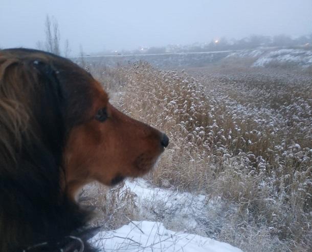 До -13ºС похолодает сегодня в Волгоградской области