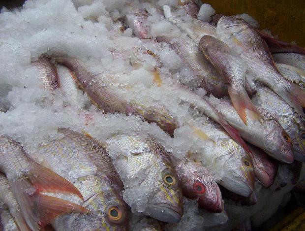 Роспотребнадзор: волгоградцев обманывают продавцы рыбопродуктов