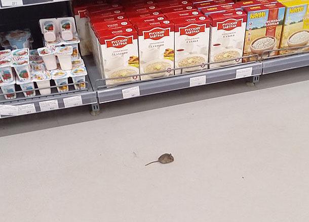 Мыши шныряют по продуктам в волгоградских супермаркетах