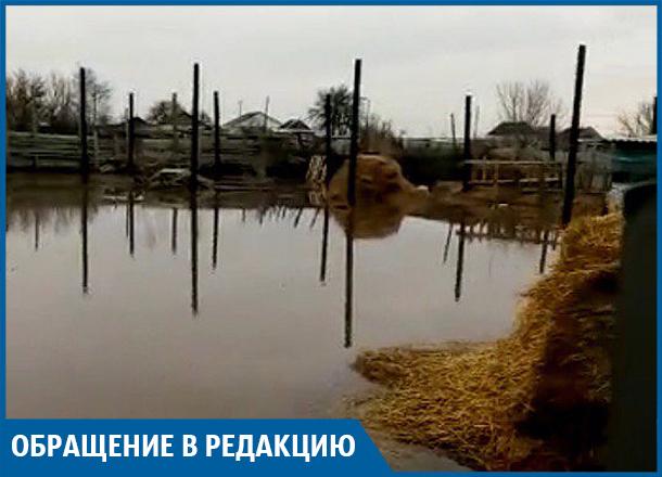 Паводок в Иловлинском районе: утонувший скот и затопленные дома