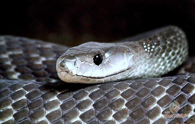 Змеи атакуют крупный город Волгоградской области