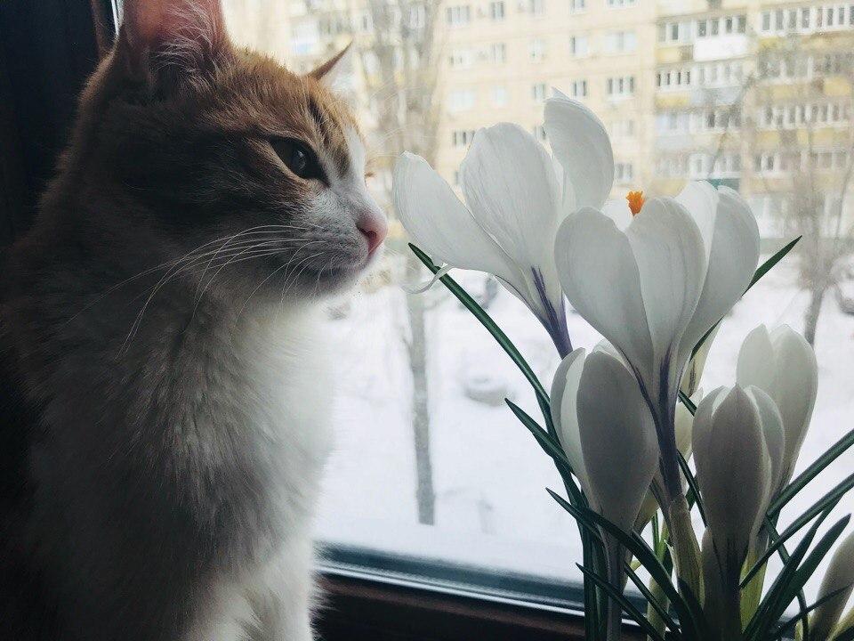 Заморозки снова вернутся в Волгоградскую область