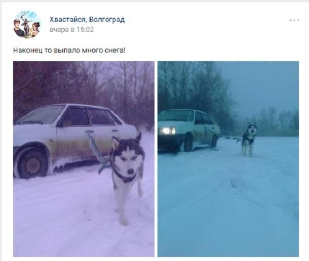 Волгоградец заставил собаку взять на буксир автомобиль