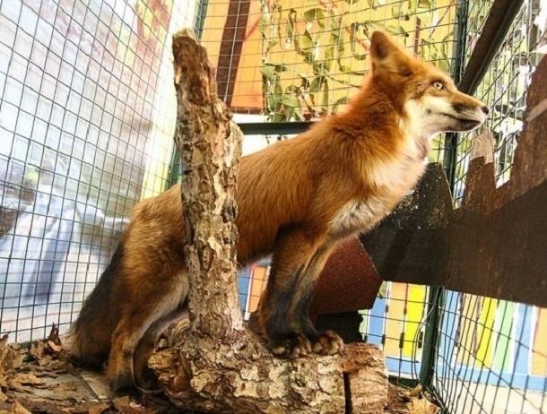 В трогательном зоопарке Волгограда в животных брызгают жидкостью для мытья стекол