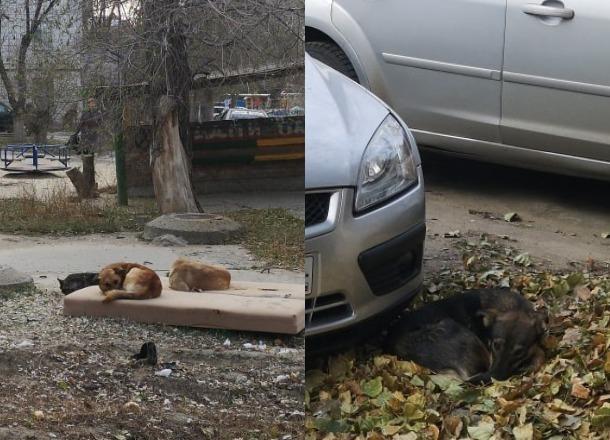 Стая собак набросилась на 10-летнего кадета на западе Волгограда