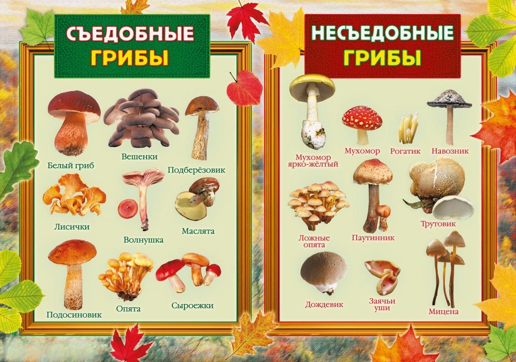 ВВолгограде участились случаи отравления грибами